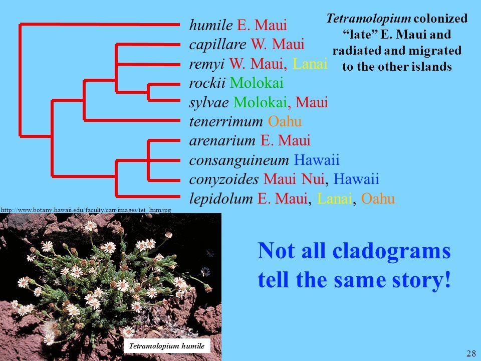 28 humile E. Maui capillare W. Maui remyi W. Maui, Lanai rockii Molokai sylvae Molokai, Maui tenerrimum Oahu arenarium E. Maui consanguineum Hawaii co
