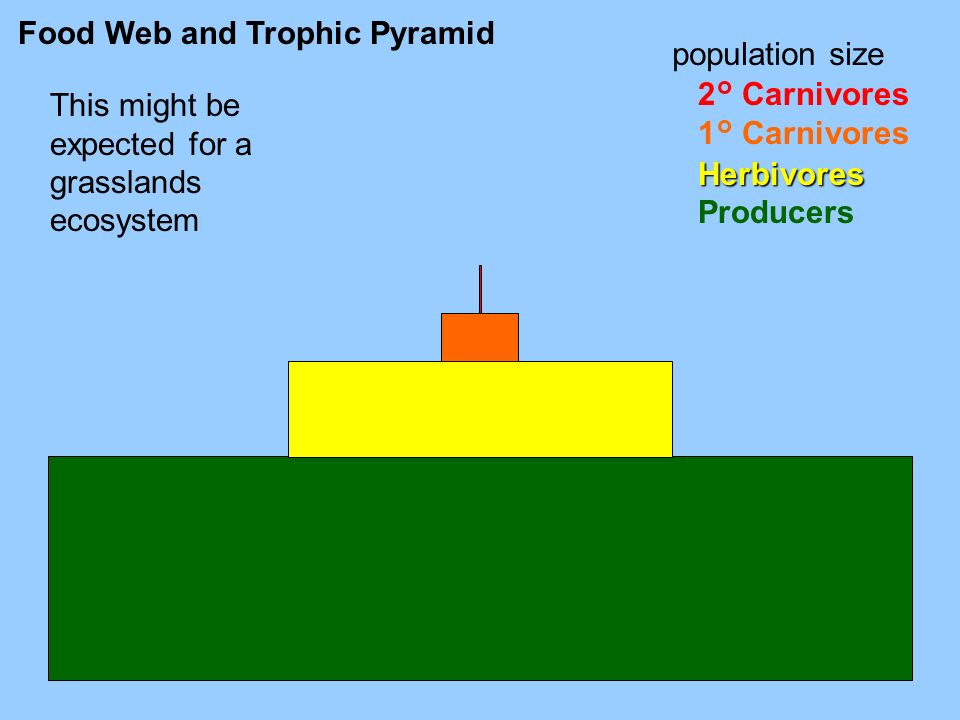Food Web and Trophic Pyramid 2° Carnivores 1° CarnivoresHerbivores Producers population size This might be expected for a grasslands ecosystem