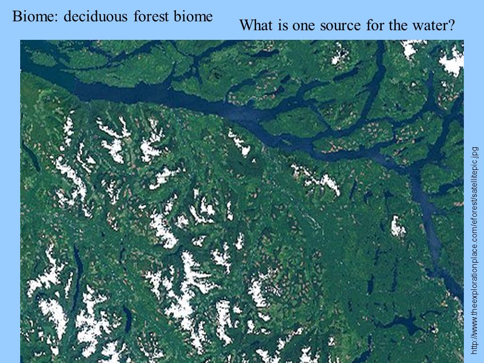 Biome: deciduous forest biome http://www.theexplorationplace.com/eforest/satellitepic.jpg What is one source for the water?