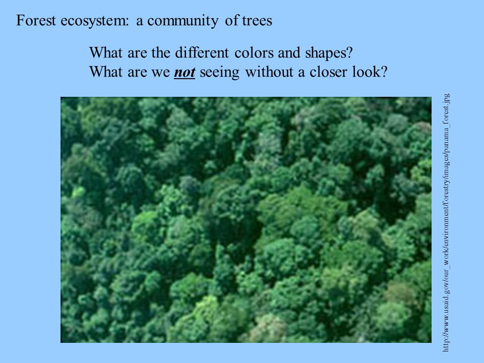 Forest ecosystem: a community of trees http://www.usaid.gov/our_work/environment/forestry/images/panama_forest.jpg What are the different colors and s