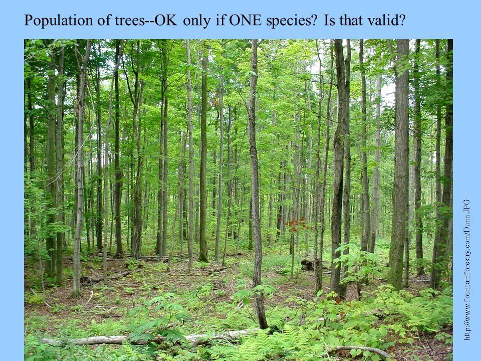 Population of trees--OK only if ONE species? Is that valid? http://www.fountainforestry.com/Dunn.JPG