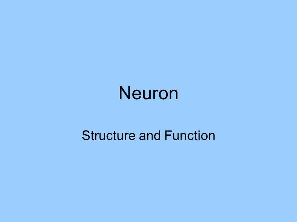 Neuron Structure and Function
