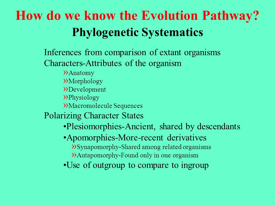 Typical Cladogram Common Ancestor Extant APresent Ancient Extinct Transitional Forms Time A A A This straight line of evolution is called anagenesis.