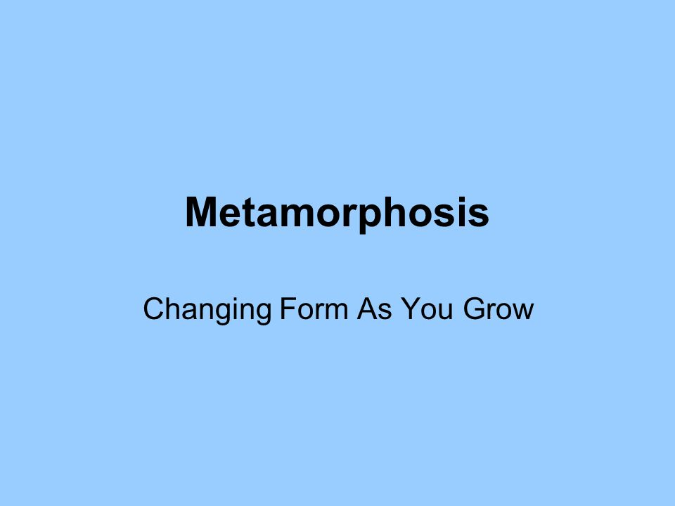 Metamorphosis Changing Form As You Grow