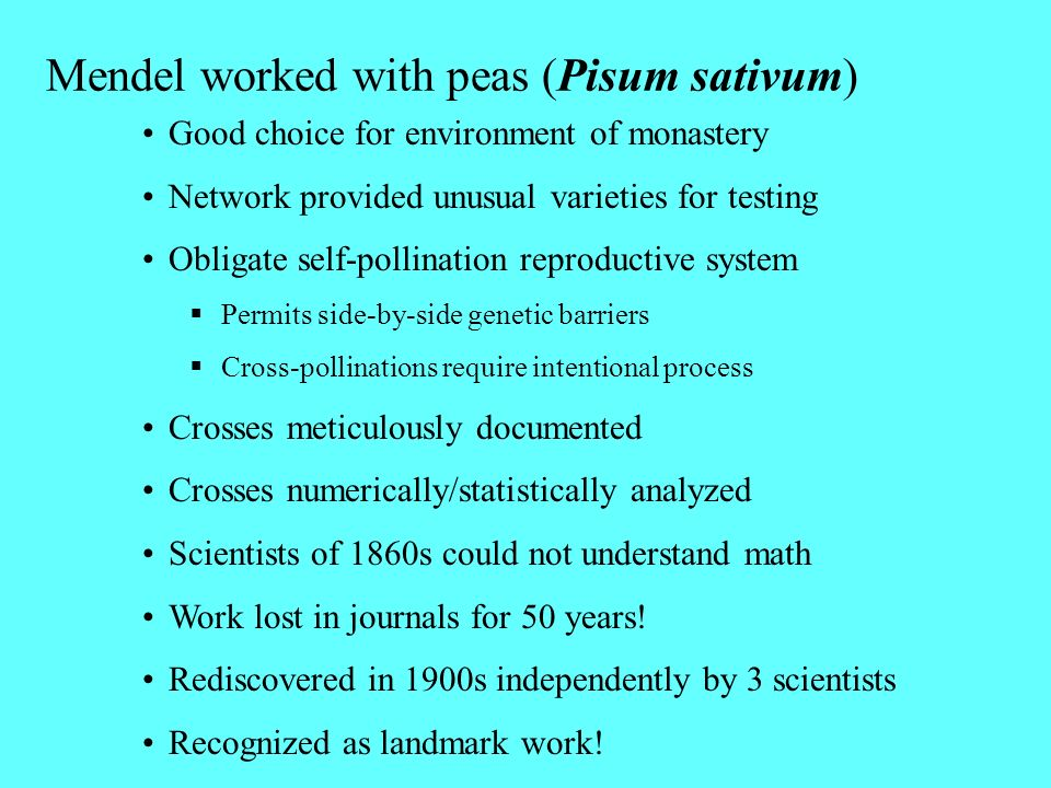 Mendel worked with peas (Pisum sativum) Good choice for environment of monastery Network provided unusual varieties for testing Obligate self-pollinat