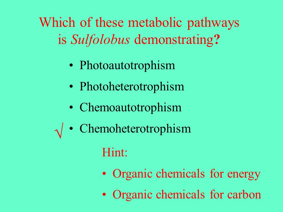 Photoautotrophism Photoheterotrophism Chemoautotrophism Chemoheterotrophism Which of these metabolic pathways is Sulfolobus demonstrating.