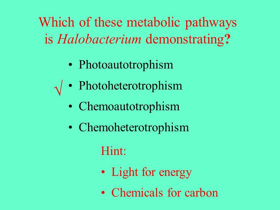 Photoautotrophism Photoheterotrophism Chemoautotrophism Chemoheterotrophism Which of these metabolic pathways is Halobacterium demonstrating.