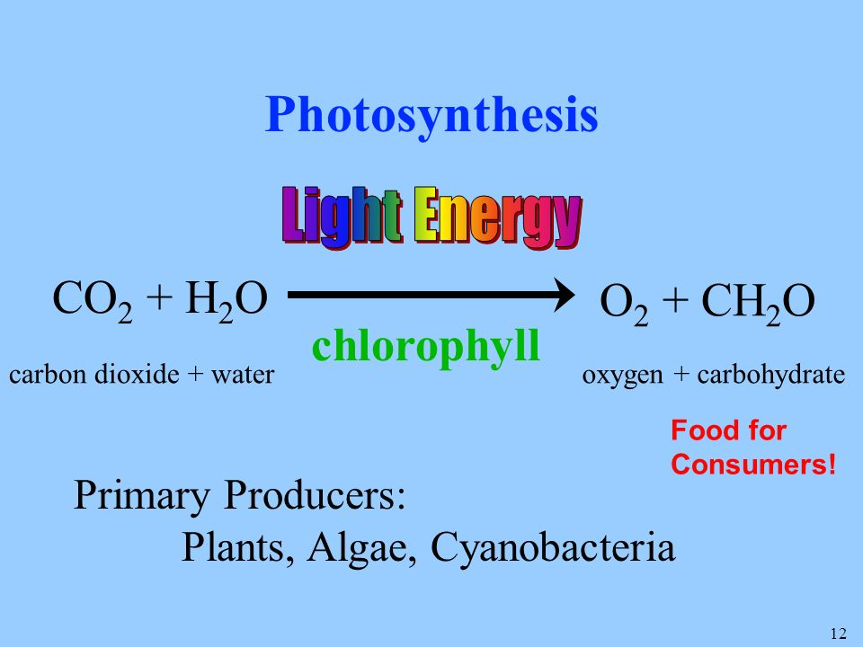 12 Photosynthesis CO 2 + H 2 O O 2 + CH 2 O carbon dioxide + wateroxygen + carbohydrate chlorophyll Primary Producers: Plants, Algae, Cyanobacteria Food for Consumers!