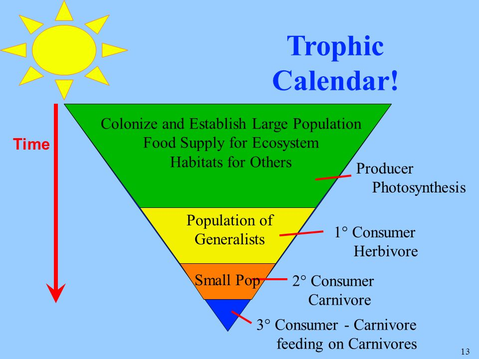 13 Trophic Calendar! 3° Consumer - Carnivore feeding on Carnivores 2° Consumer Carnivore 1° Consumer Herbivore Producer Photosynthesis Time Colonize a