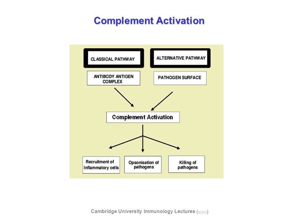 Cambridge University Immunology Lectures (www)www Complement Activation