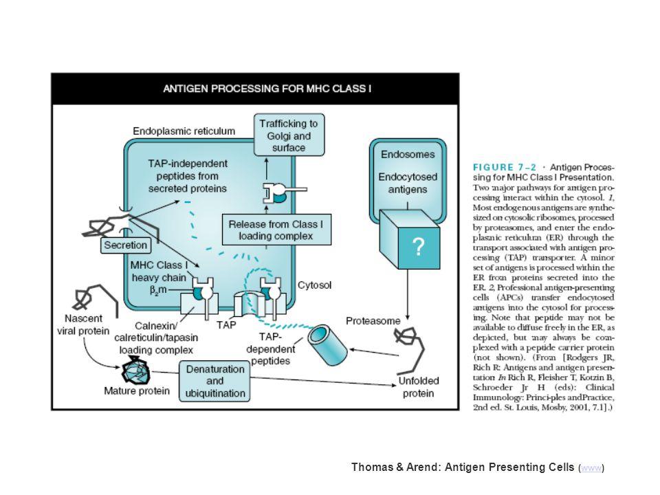 Thomas & Arend: Antigen Presenting Cells (www)www