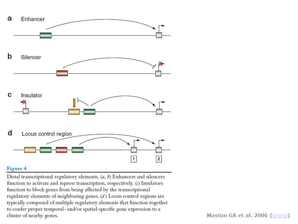 Maston GA et al. 2006 (www)www