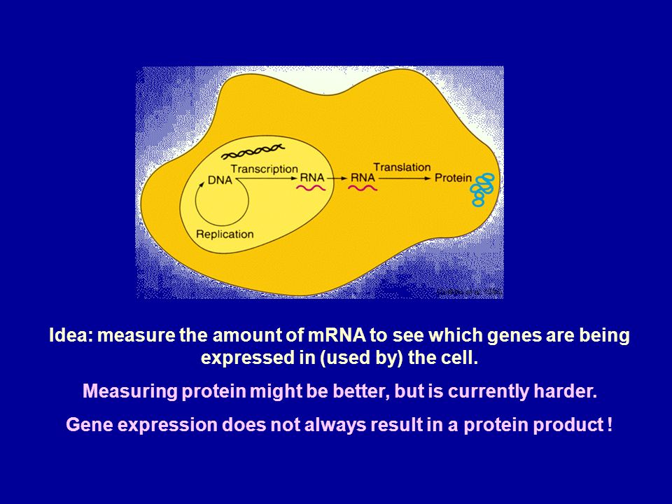 Idea: measure the amount of mRNA to see which genes are being expressed in (used by) the cell. Measuring protein might be better, but is currently har