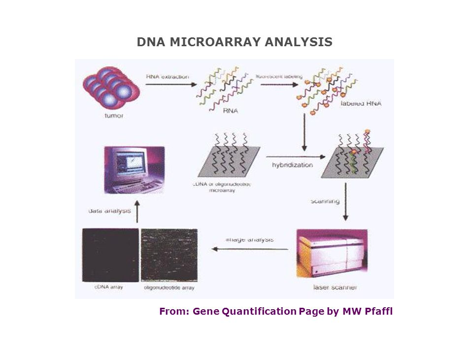 From: Gene Quantification Page by MW Pfaffl DNA MICROARRAY ANALYSIS
