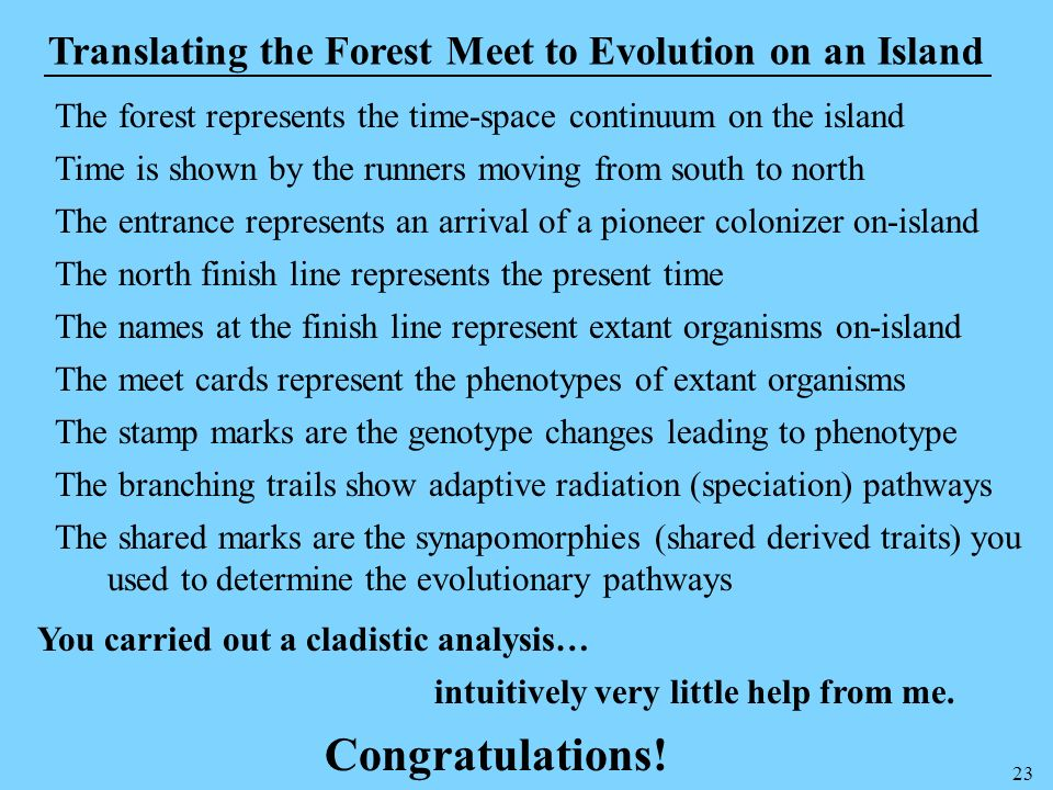 23 Translating the Forest Meet to Evolution on an Island The forest represents the time-space continuum on the island Time is shown by the runners mov