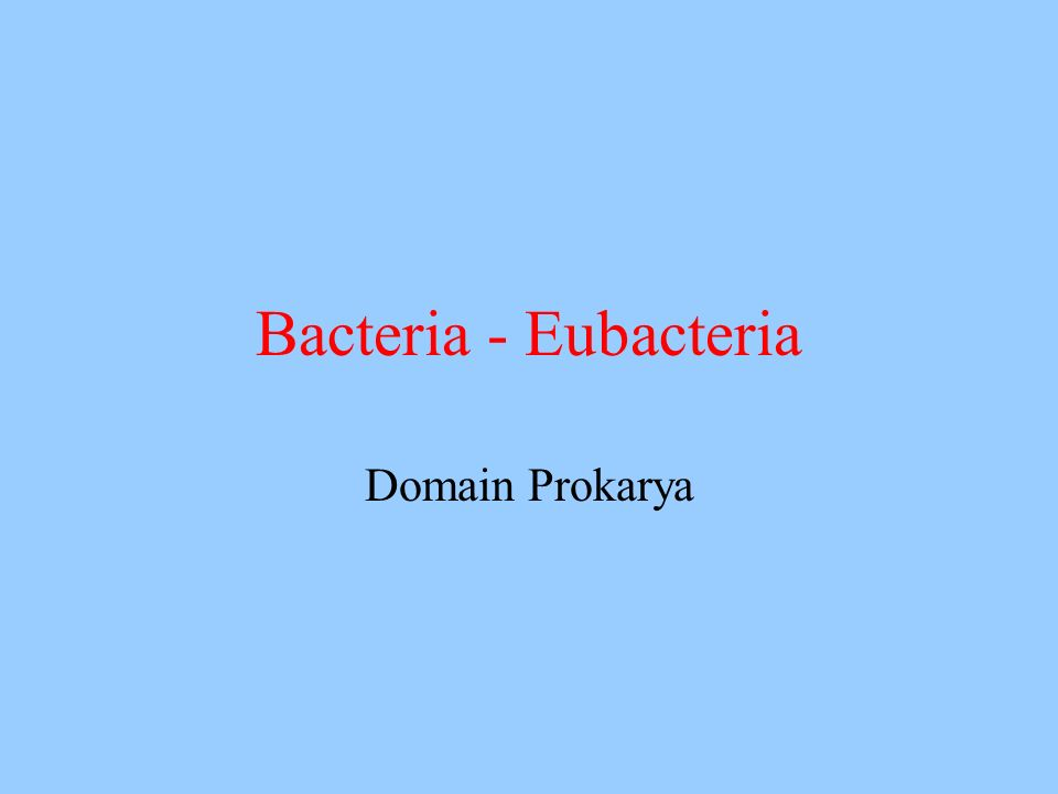 Bacteria - Eubacteria Domain Prokarya
