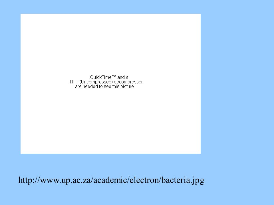 http://www.up.ac.za/academic/electron/bacteria.jpg