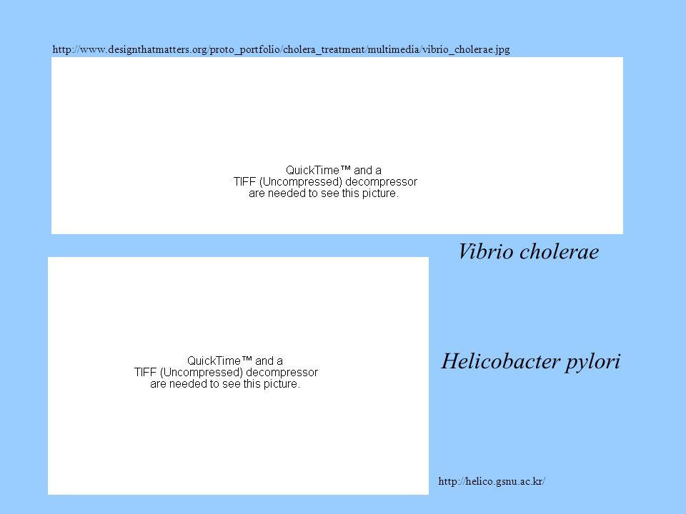 http://www.designthatmatters.org/proto_portfolio/cholera_treatment/multimedia/vibrio_cholerae.jpg http://helico.gsnu.ac.kr/ Vibrio cholerae Helicobact