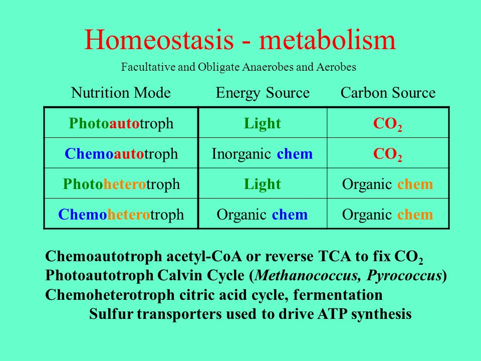 Homeostasis - metabolism Chemoautotroph acetyl-CoA or reverse TCA to fix CO 2 Photoautotroph Calvin Cycle (Methanococcus, Pyrococcus) Chemoheterotroph