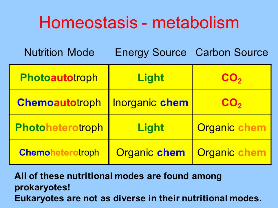 Homeostasis - metabolism All of these nutritional modes are found among prokaryotes! Eukaryotes are not as diverse in their nutritional modes. Nutriti