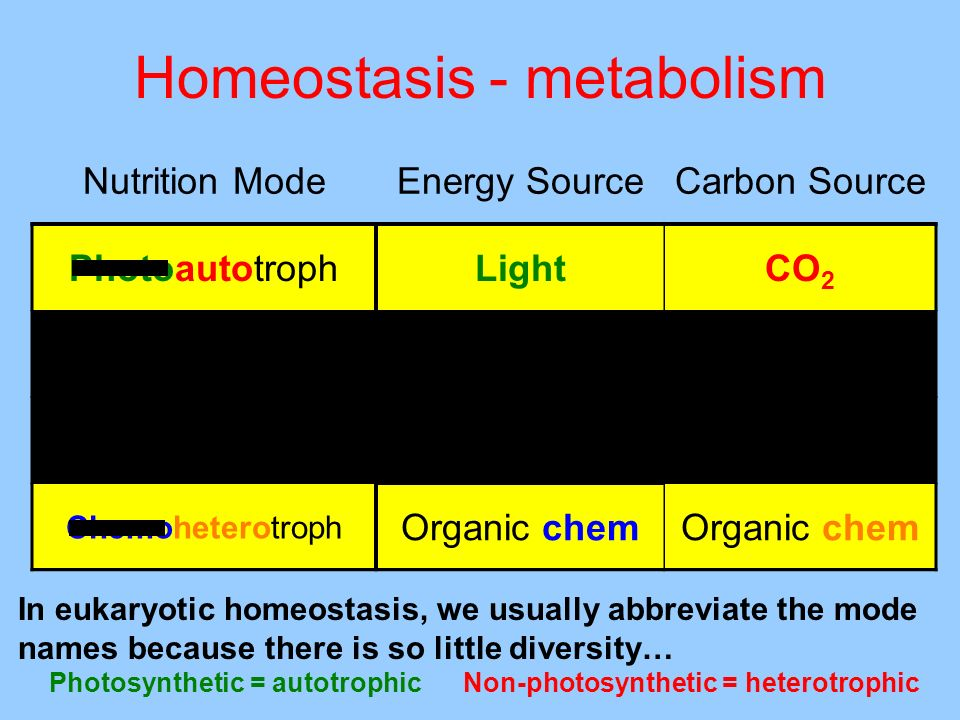 Homeostasis - metabolism In eukaryotic homeostasis, we usually abbreviate the mode names because there is so little diversity… Photosynthetic = autotr