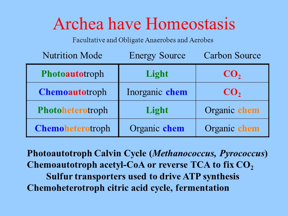 Archea have Homeostasis Photoautotroph Calvin Cycle (Methanococcus, Pyrococcus) Chemoautotroph acetyl-CoA or reverse TCA to fix CO 2 Sulfur transporte