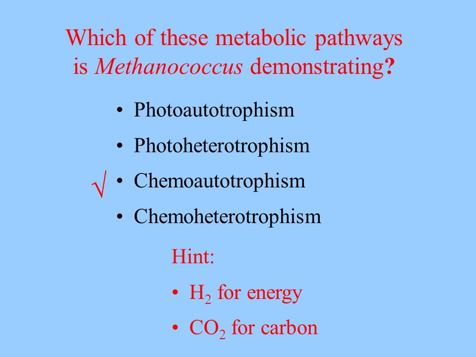 Photoautotrophism Photoheterotrophism Chemoautotrophism Chemoheterotrophism Which of these metabolic pathways is Methanococcus demonstrating? Hint: H
