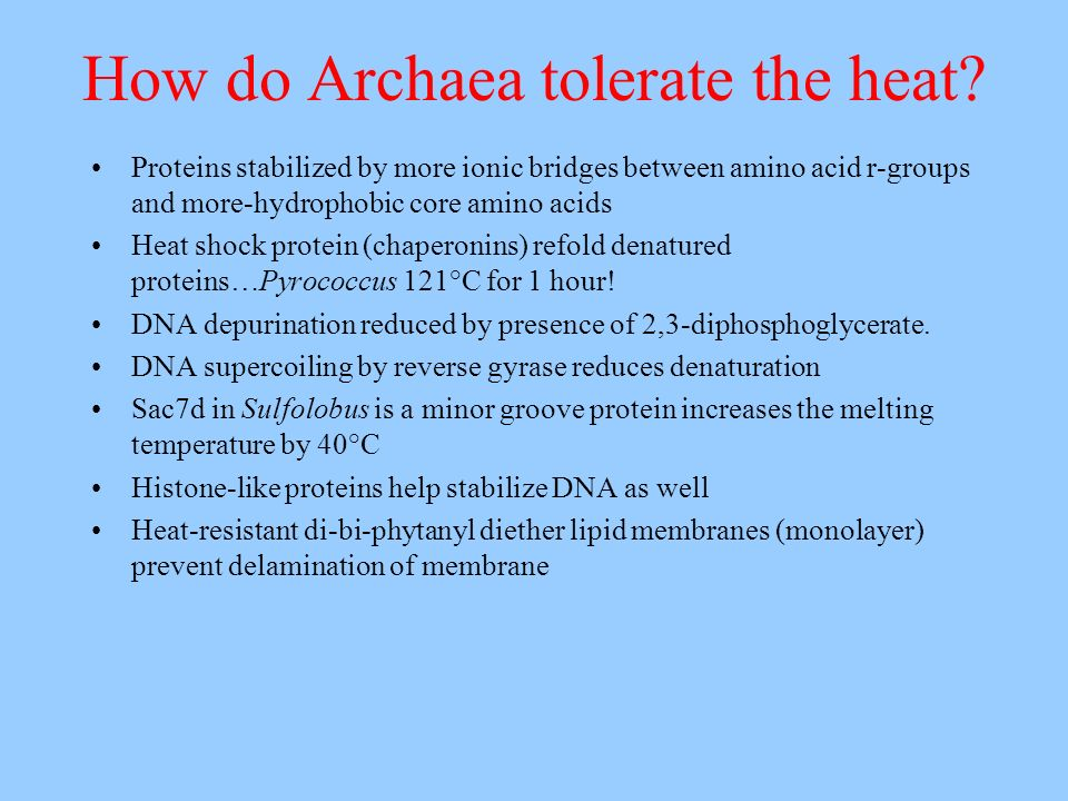How do Archaea tolerate the heat? Proteins stabilized by more ionic bridges between amino acid r-groups and more-hydrophobic core amino acids Heat sho