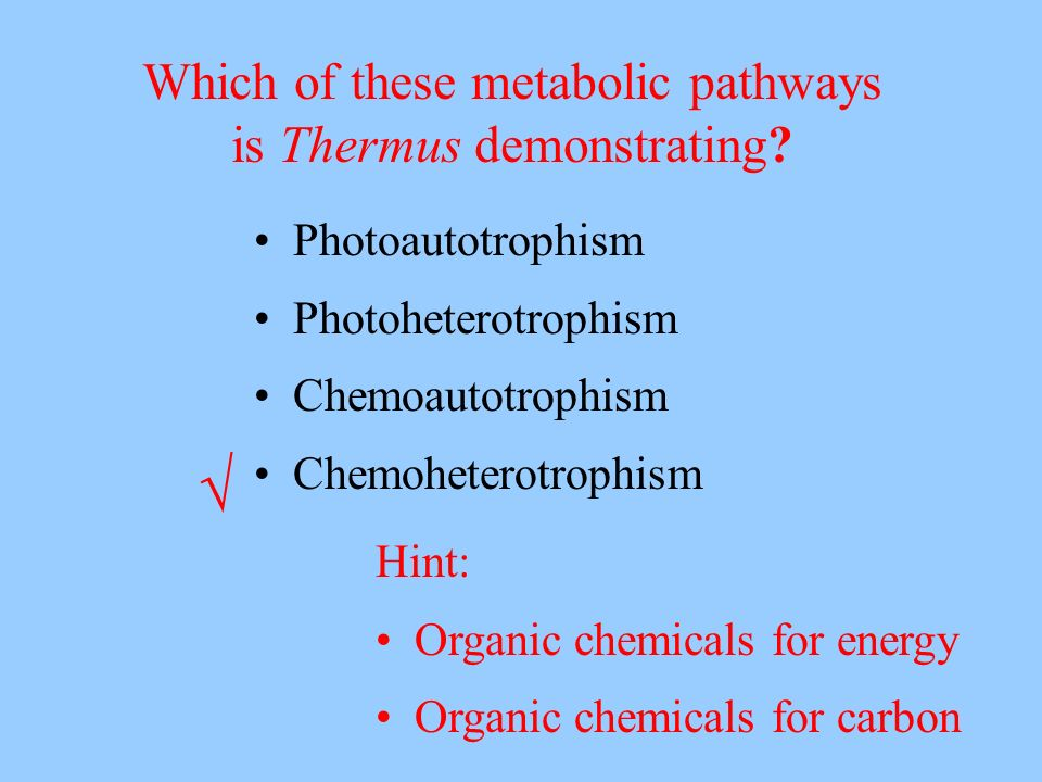 Photoautotrophism Photoheterotrophism Chemoautotrophism Chemoheterotrophism Which of these metabolic pathways is Thermus demonstrating? Hint: Organic