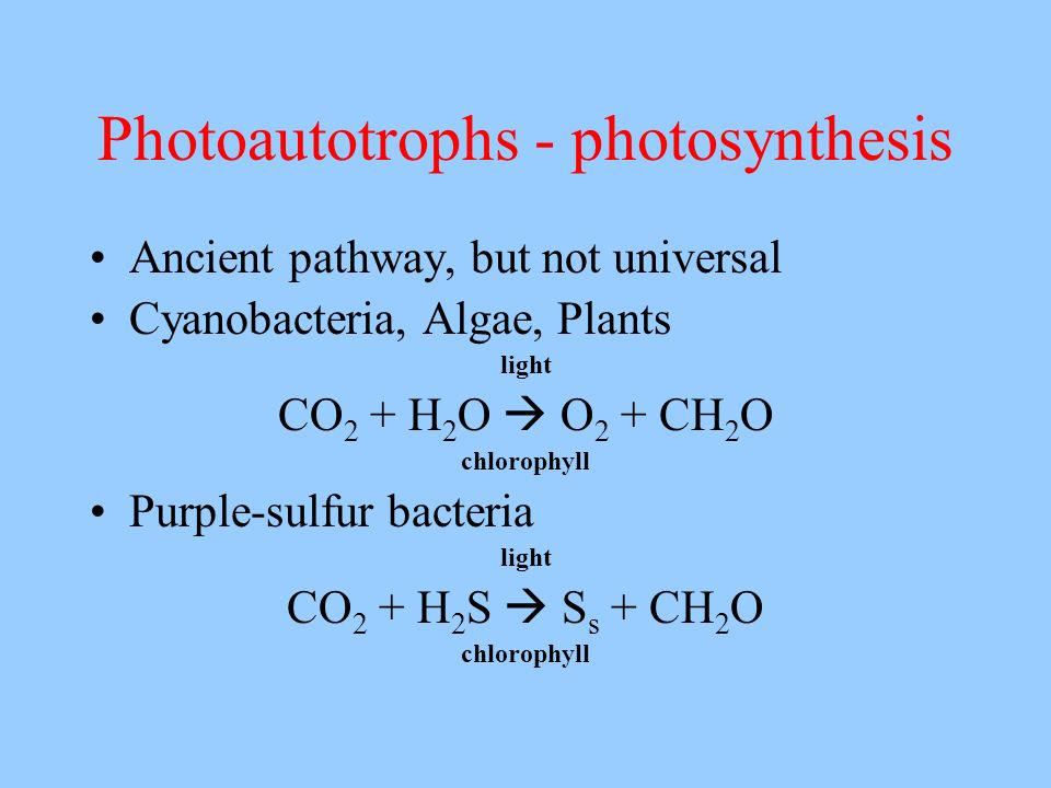 Photoautotrophs - photosynthesis Ancient pathway, but not universal Cyanobacteria, Algae, Plants light CO 2 + H 2 O O 2 + CH 2 O chlorophyll Purple-su