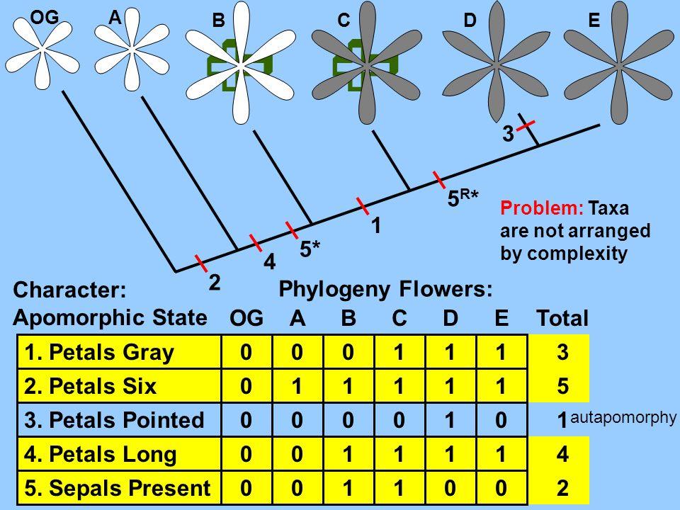 OGA B CDE Character: Apomorphic State 1. Petals Gray 2. Petals Six 3. Petals Pointed 4. Petals Long 5. Sepals Present Phylogeny Flowers: OGABCDE 0 0 0