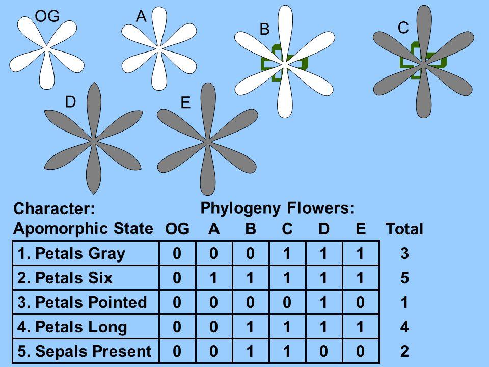 A B C D E Character: Apomorphic State 1. Petals Gray 2. Petals Six 3. Petals Pointed 4. Petals Long 5. Sepals Present Phylogeny Flowers: OGABCDE 0 0 0