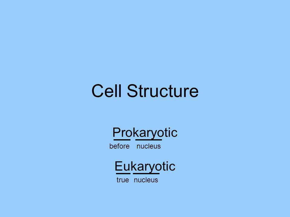 Cell Structure Prokaryotic beforenucleus Eukaryotic truenucleus