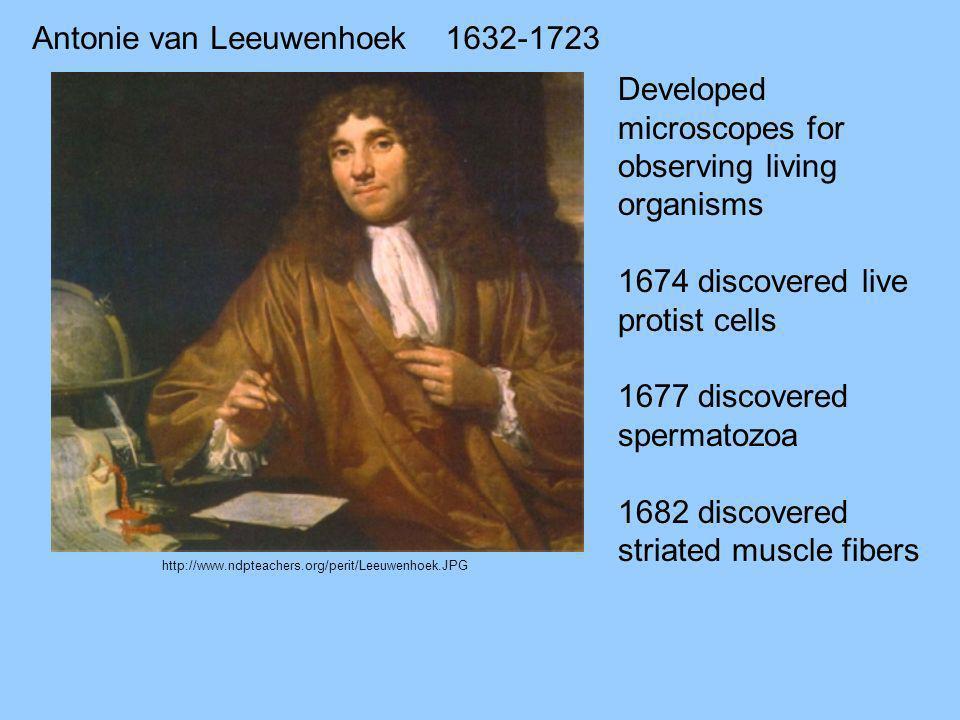 Antonie van Leeuwenhoek1632-1723 Developed microscopes for observing living organisms 1674 discovered live protist cells 1677 discovered spermatozoa 1