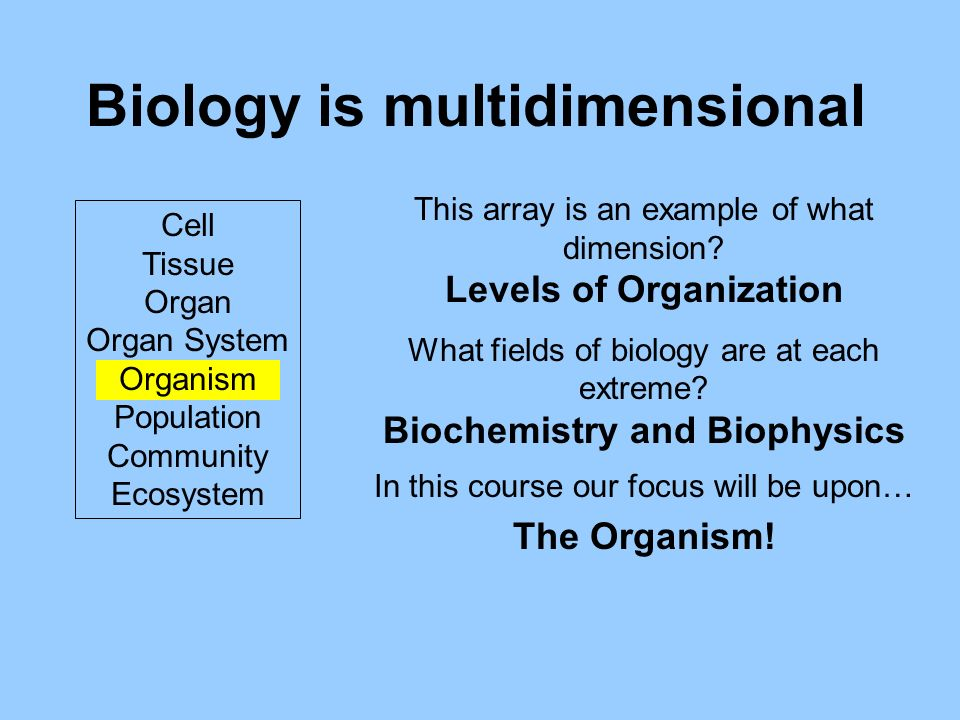 Biology is multidimensional Cell Tissue Organ Organ System Organism Population Community Ecosystem This array is an example of what dimension.