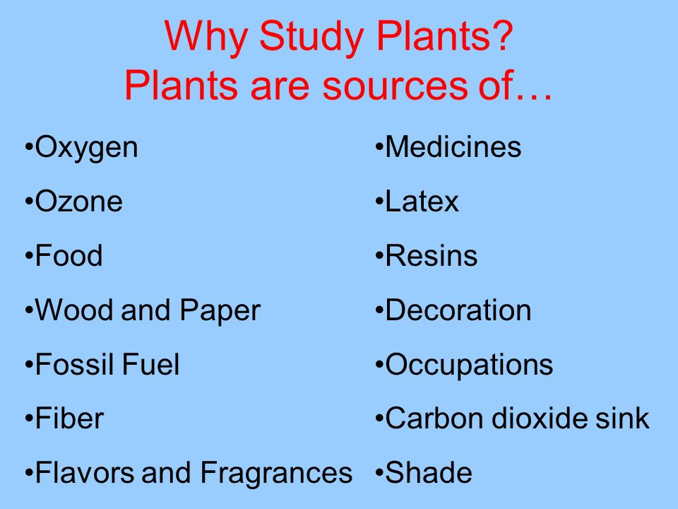Why Study Plants? Plants are sources of… Oxygen Ozone Food Wood and Paper Fossil Fuel Fiber Flavors and Fragrances Medicines Latex Resins Decoration O