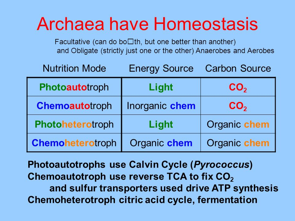 Archaea have Homeostasis Photoautotrophs use Calvin Cycle (Pyrococcus) Chemoautotroph use reverse TCA to fix CO 2 and sulfur transporters used drive A