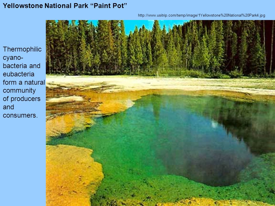 http://www.usitrip.com/temp/image/1Yellowstone%20National%20Park4.jpg Yellowstone National Park Paint Pot Thermophilic cyano- bacteria and eubacteria