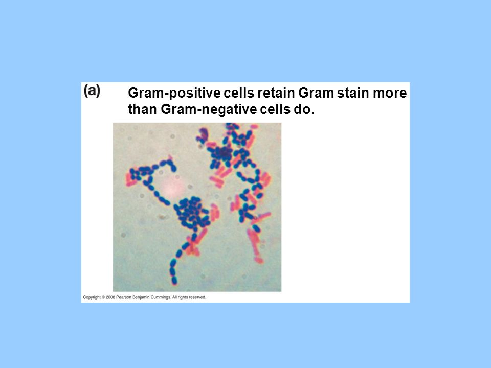 Gram-positive cells retain Gram stain more than Gram-negative cells do.