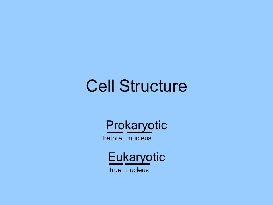 Cell Structure: Nucleoid transcription by RNA polymerase one circular DNA molecule no histone protein association attached to cell membrane separation of chromosomes replication by DNA polymerase Nucleoid - genome translation of mRNA into protein rRNA + protein + ribozymes 70S Ribosome cytokinesis by furrowing Process called binary fission NOT mitosis.