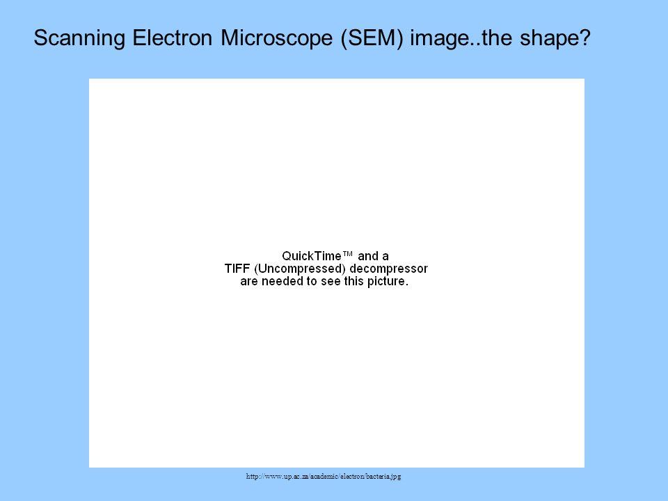 http://www.up.ac.za/academic/electron/bacteria.jpg Scanning Electron Microscope (SEM) image..the shape?