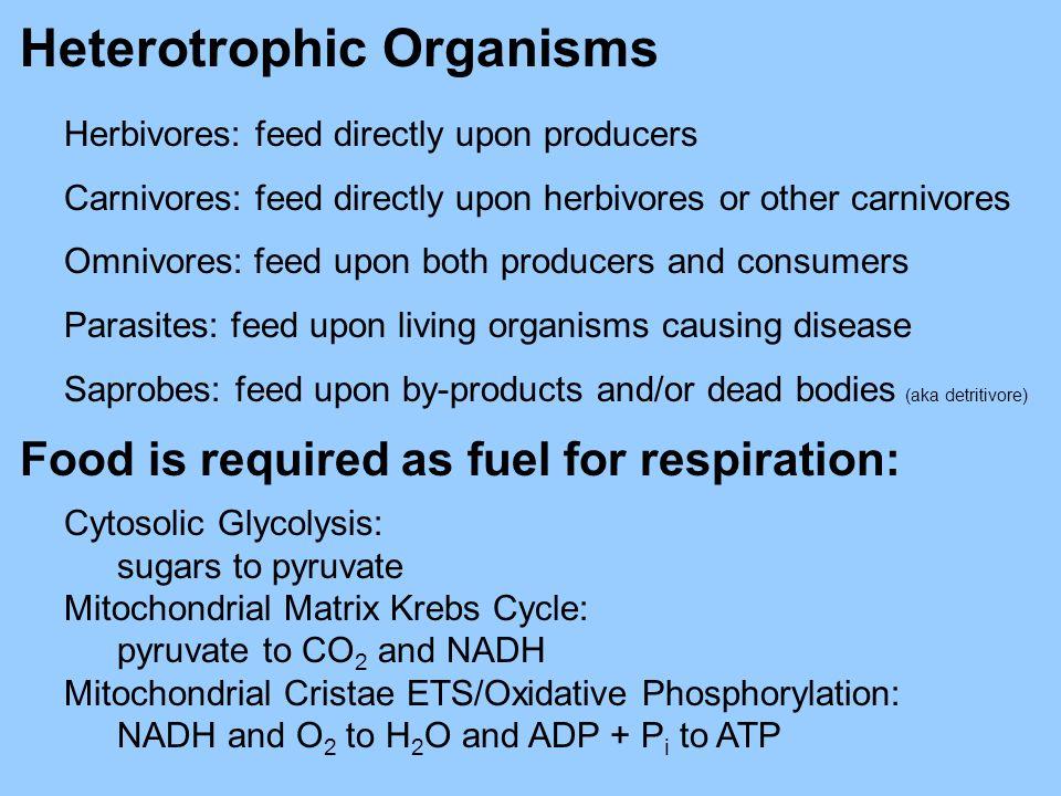 Heterotrophic Organisms Herbivores: feed directly upon producers Carnivores: feed directly upon herbivores or other carnivores Omnivores: feed upon bo