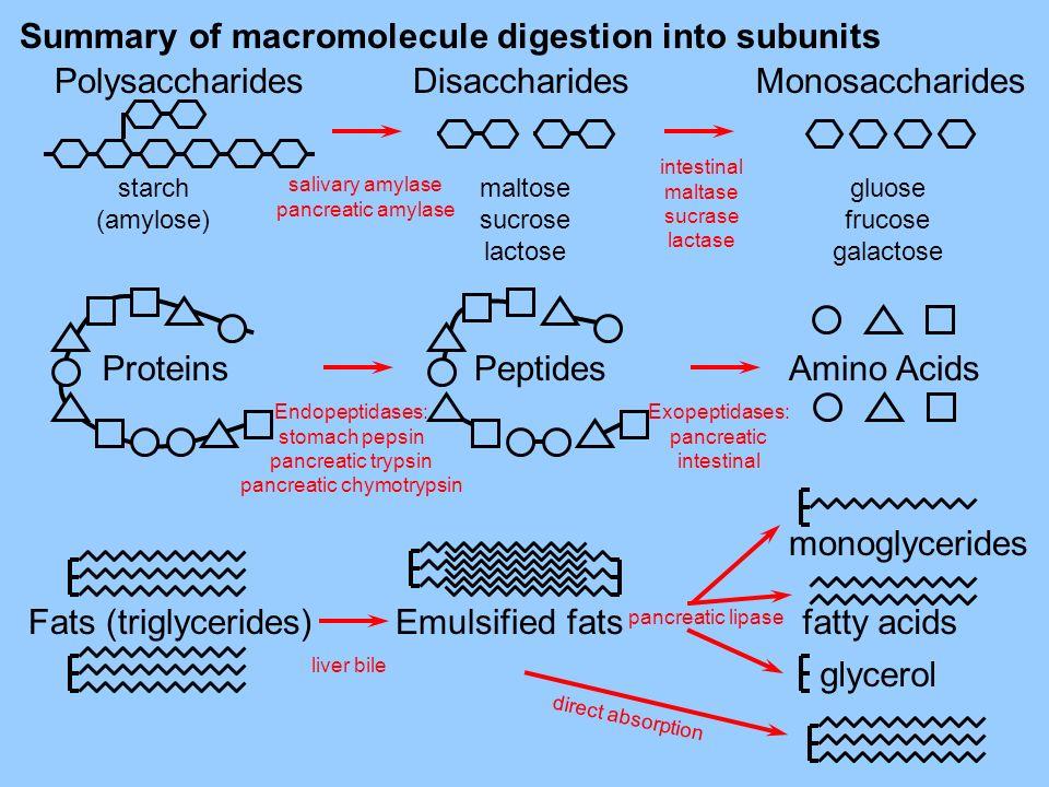 Summary of macromolecule digestion into subunits Disaccharides maltose sucrose lactose Monosaccharides gluose frucose galactose Polysaccharides starch