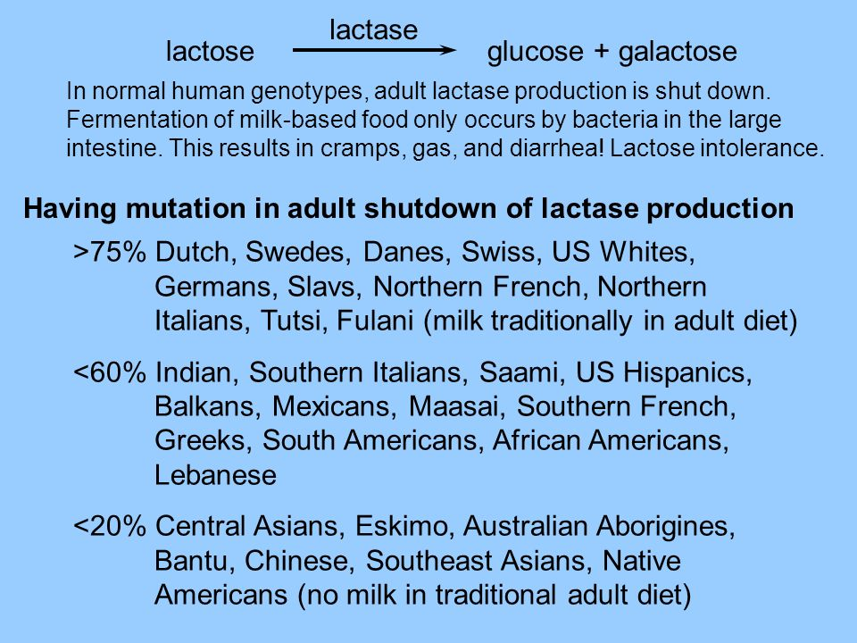 >75% Dutch, Swedes, Danes, Swiss, US Whites, Germans, Slavs, Northern French, Northern Italians, Tutsi, Fulani (milk traditionally in adult diet) <60%
