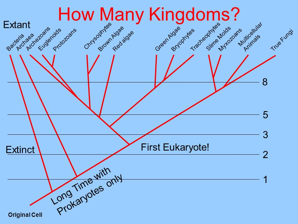 How Many Kingdoms.