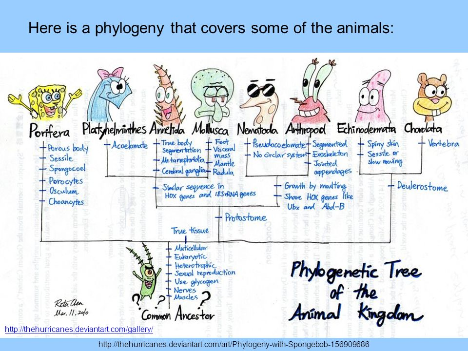 http://thehurricanes.deviantart.com/art/Phylogeny-with-Spongebob-156909686 http://thehurricanes.deviantart.com/gallery/ Here is a phylogeny that covers some of the animals: