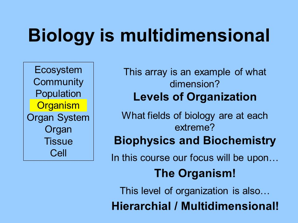 Biology is multidimensional Ecosystem Community Population Organism Organ System Organ Tissue Cell This array is an example of what dimension.