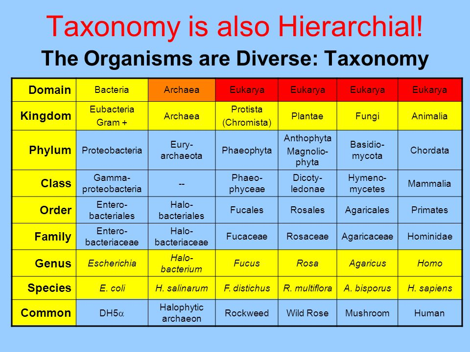 Taxonomy is also Hierarchial.