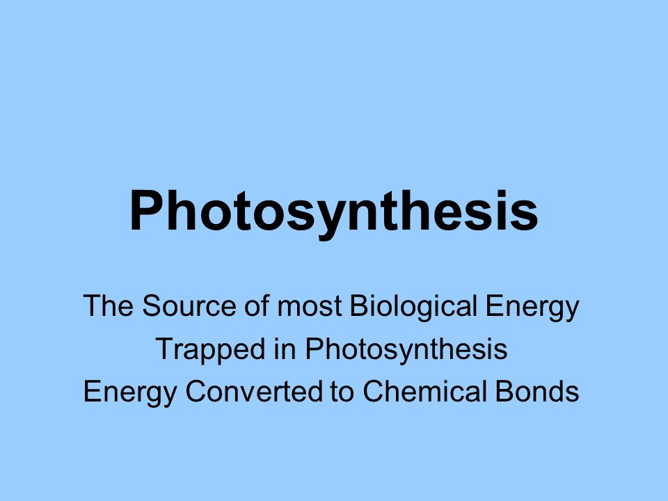 What intensities of light drive photosynthesis.