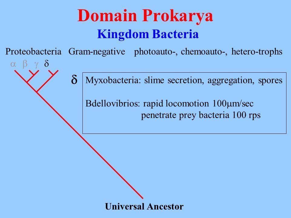 Domain Prokarya Kingdom Bacteria Universal Ancestor Proteobacteria Gram-negativephotoauto-, chemoauto-, hetero-trophs Myxobacteria: slime secretion, a